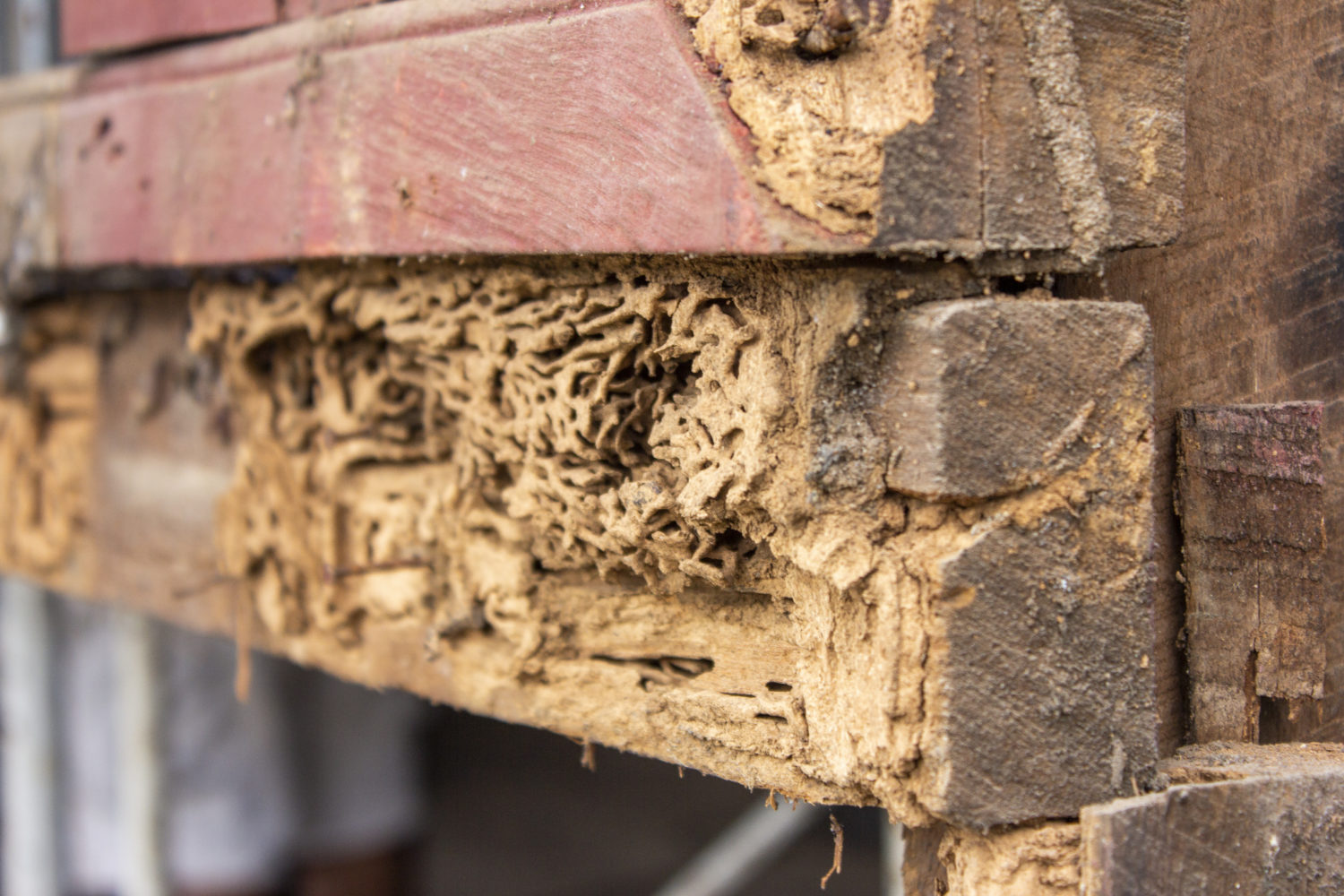a home with termite damage