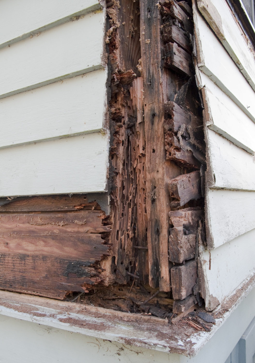 siding of a Houston home with termite damage