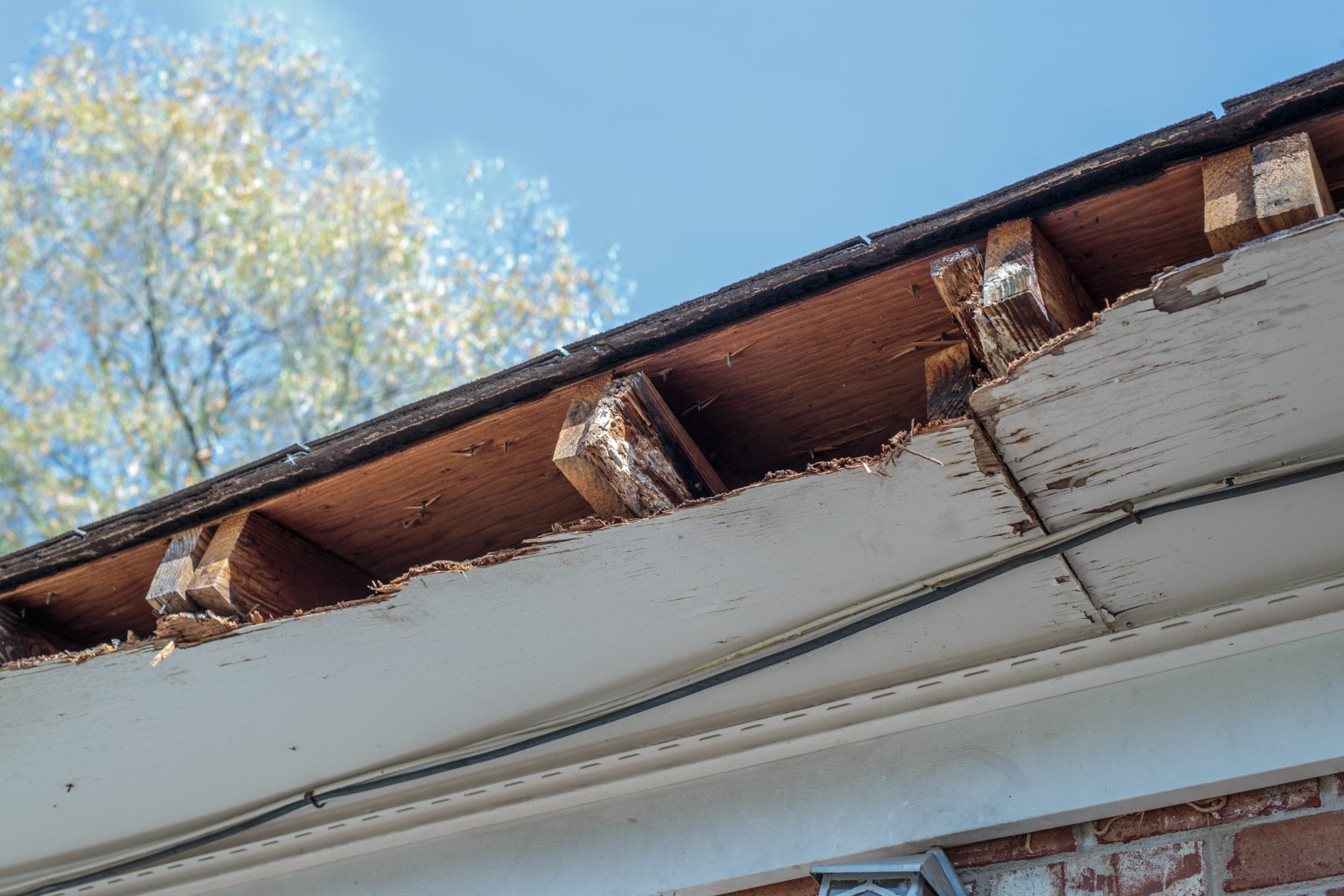 home rafters with termite damage in Houston, TX